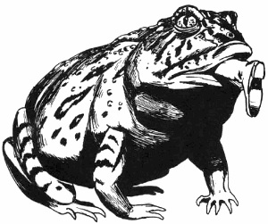 Holloway Toad