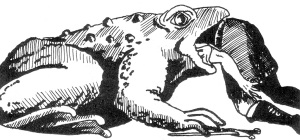 Sutherland Toad